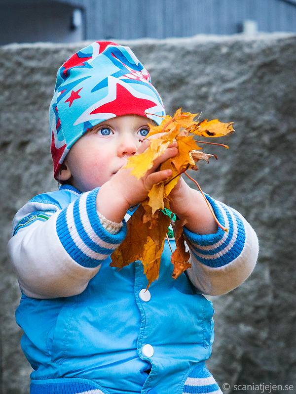 child photography autumn