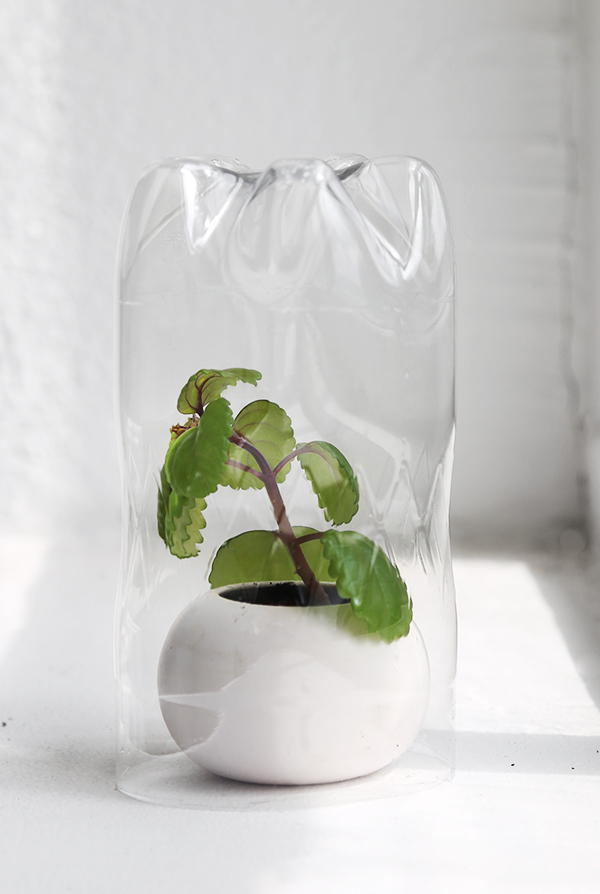 DIY  Plantkuvös av PET-flaskor 5de9022aa43a9