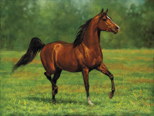 Brown Horse Pictures