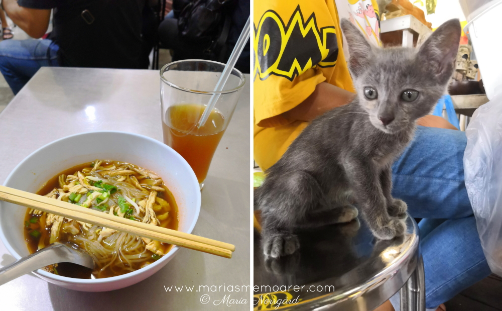 Bangkok old town - noodle soup and kitten