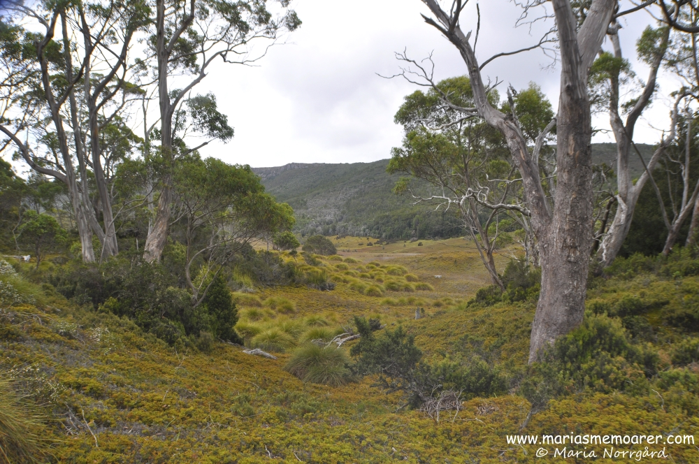 Tasmanian nature in Cradle Mountain