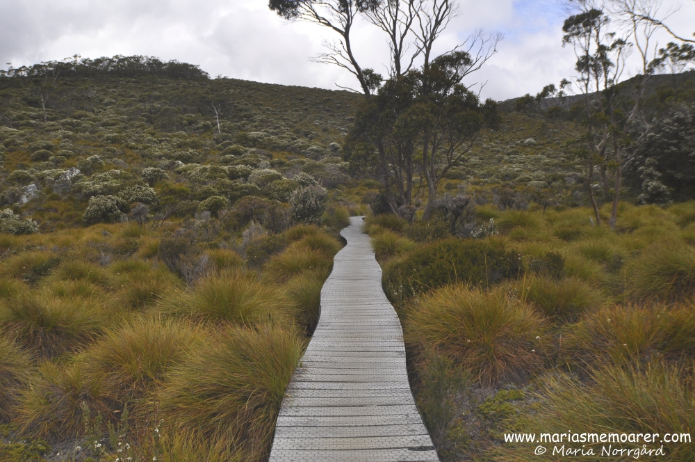 hiking in Cradle Mountain, Tasmania, Australia