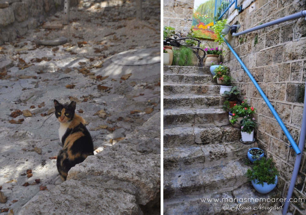Cats of Israel, Old Jaffa