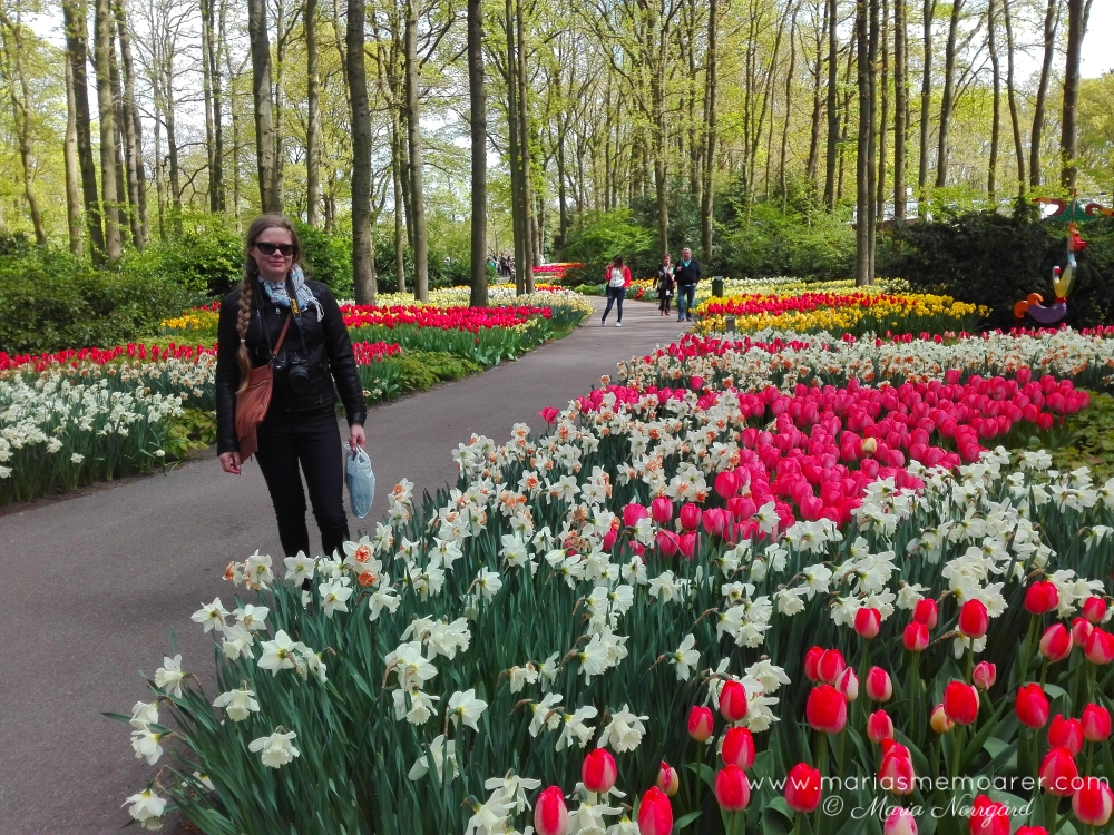 Spring in Holland, Keukenhof tulip park in the Netherlands