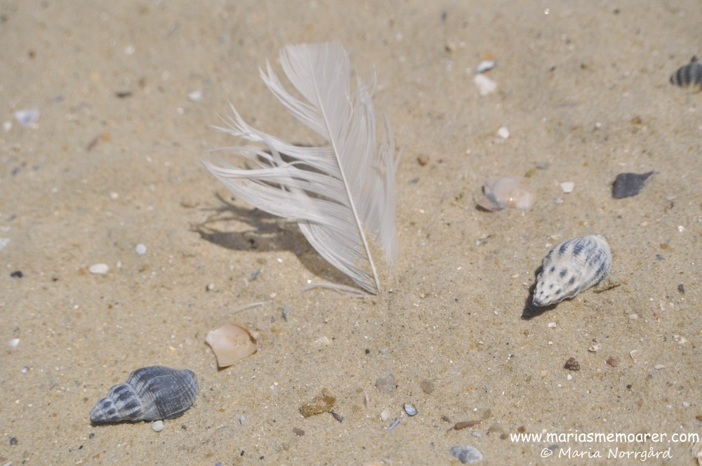 St Kilda beach, Shells and feathers