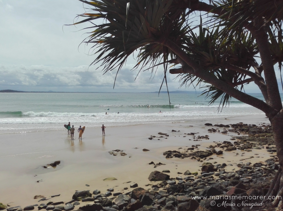 Little Cove Beach in Noosa National Park