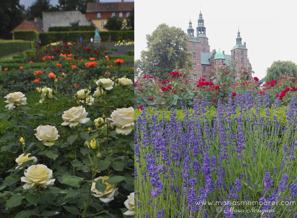 Sightseeing in Copenhagen - Rosenborg Castle and rosegarden in Kongens Have