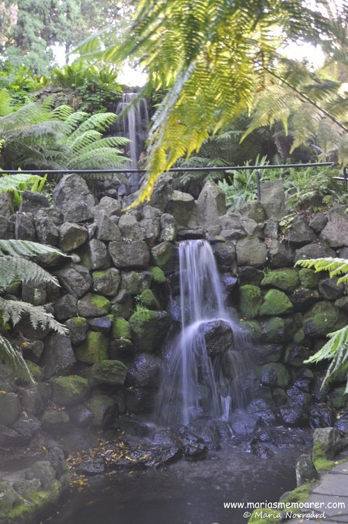 Royal Botanic Gardens, Melbourne - exotic waterfall in rainforest environment