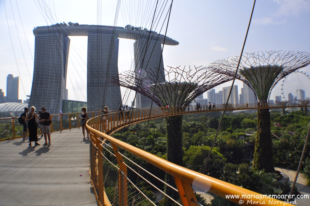 ocbc skyway - trädtoppspromenad bland supertrees i Gardens by the Bay, Singapore