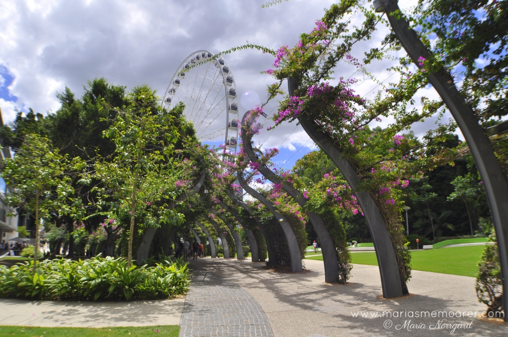 Things to see in Brisbane: the Wheel and the Arbour - saker att se i Brisbane