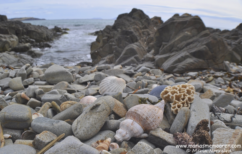 seashells and rocks in Tasmania, Lords Bluff