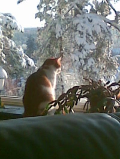 I absolutely love this picture, my cat Mio by the window looking at the snow (or rather, whatever bird was stupid enough not to go south for the brutal Swedish winter!) Not that I mind, if it were up to me, it would be winter 75% of the year :)