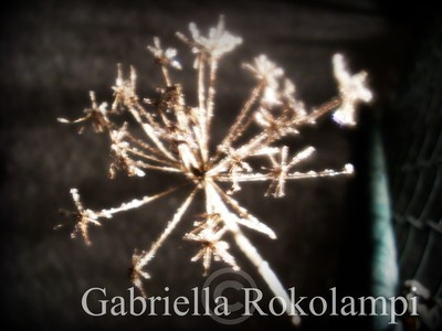 Copyright by; Gabriella Rokolampi