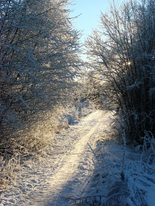 Wintry pathway