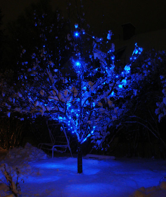 Blue lit apple tree with snow