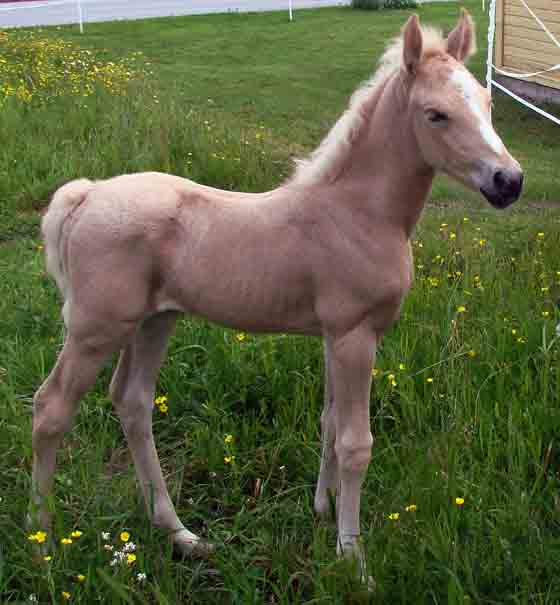 One week old horse