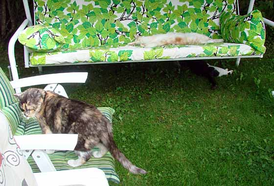 Cats occupying garden chairs
