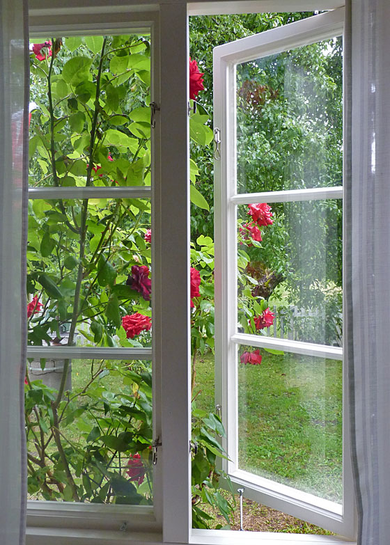 Roses and window at Snickargarden