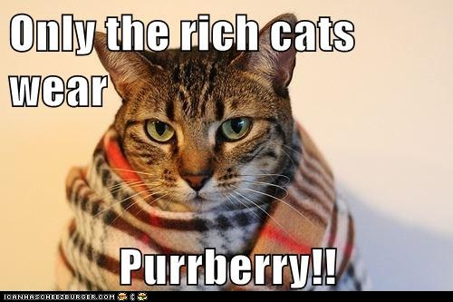 Burberry-cat.