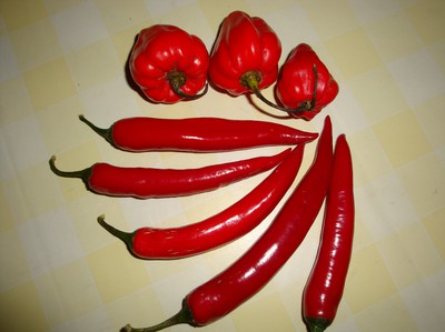 Scotch bonnet, stark chilipeppar.