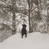 Snömonster