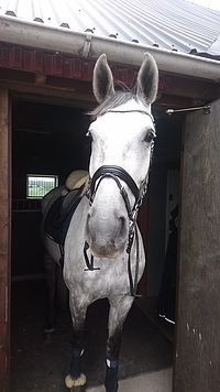 Min lilla häst