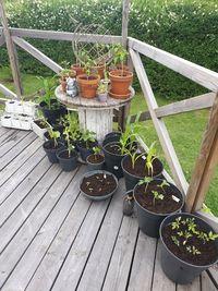 Jag behöver ett växthus..på riktigt!